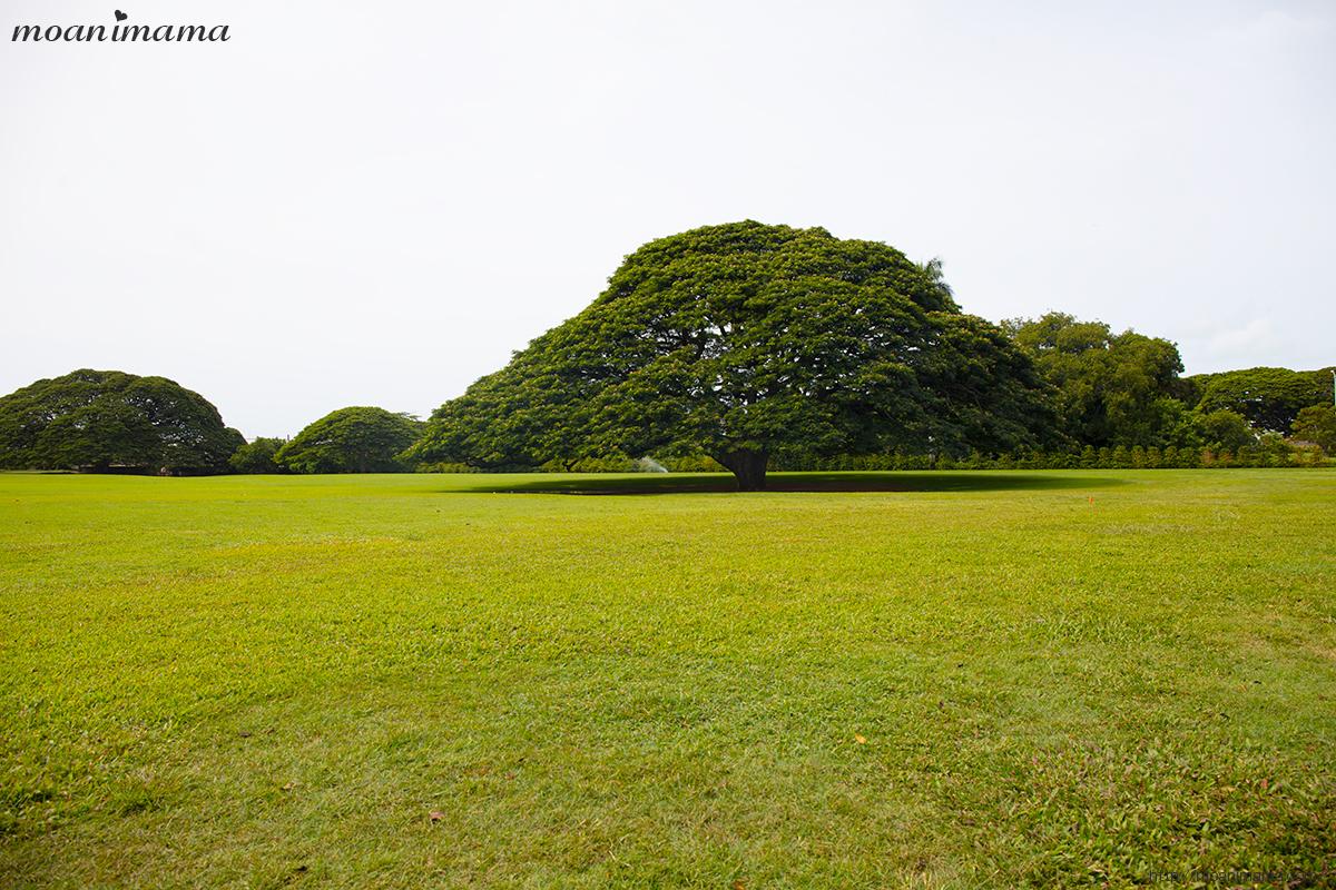 この木なんの木気になる木 日立の樹
